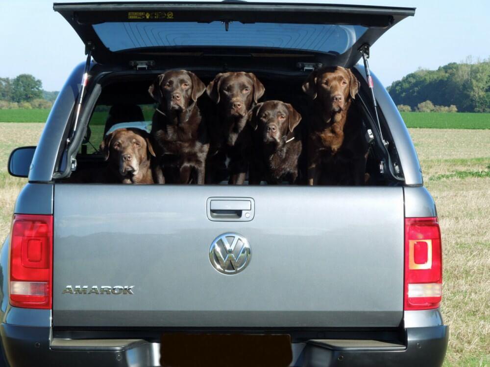 CARRYBOY Hardtop 560 mit seitlichen Schiebefenster für VW Amarok Doppelkabine hundefreunliches Hardtop