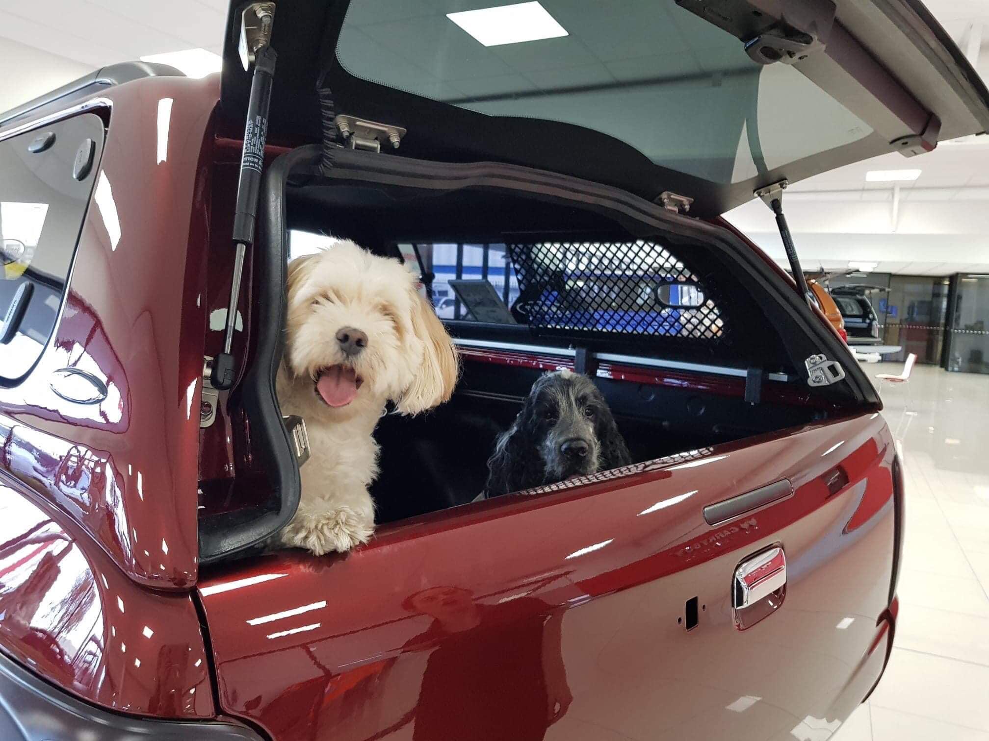 Carryboy Hardtop mit Schiebefenster und Hundegitter